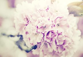 flowers-bouquet-1031266_640